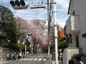 Sakurazaka_1