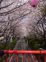Sakurazaka_2
