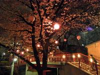 Sakurazaka_3