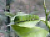 Ageha2012_06m