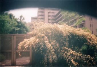 Nakayoshi_8