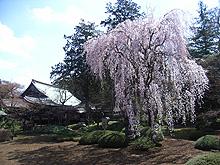 Kawagoe_1_2