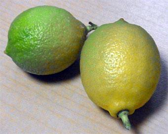 Lemon_4
