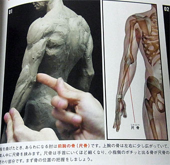 Anatomy_3