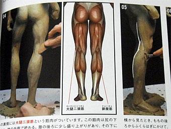 Anatomy_4