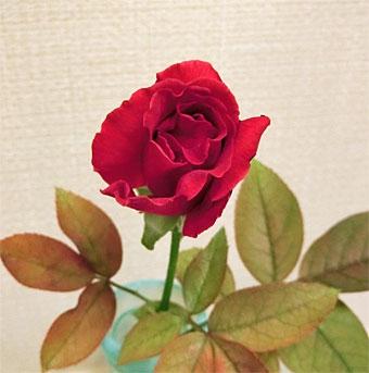 Rose_3_20200831204601